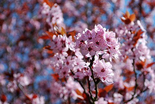 floraler-grus