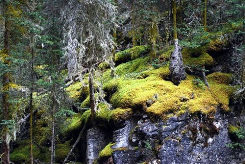 Johnston Canyon Trail 2