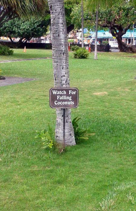 Big Island24