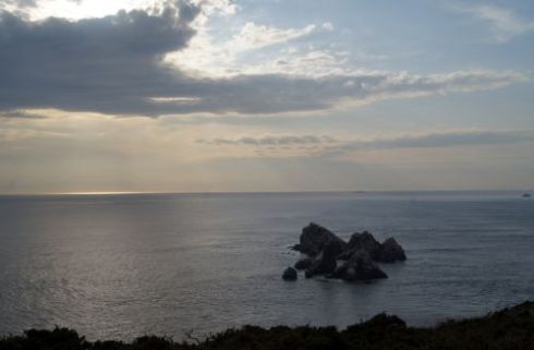 gannet11