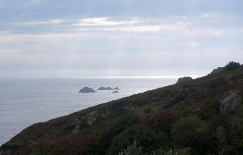 gannet4